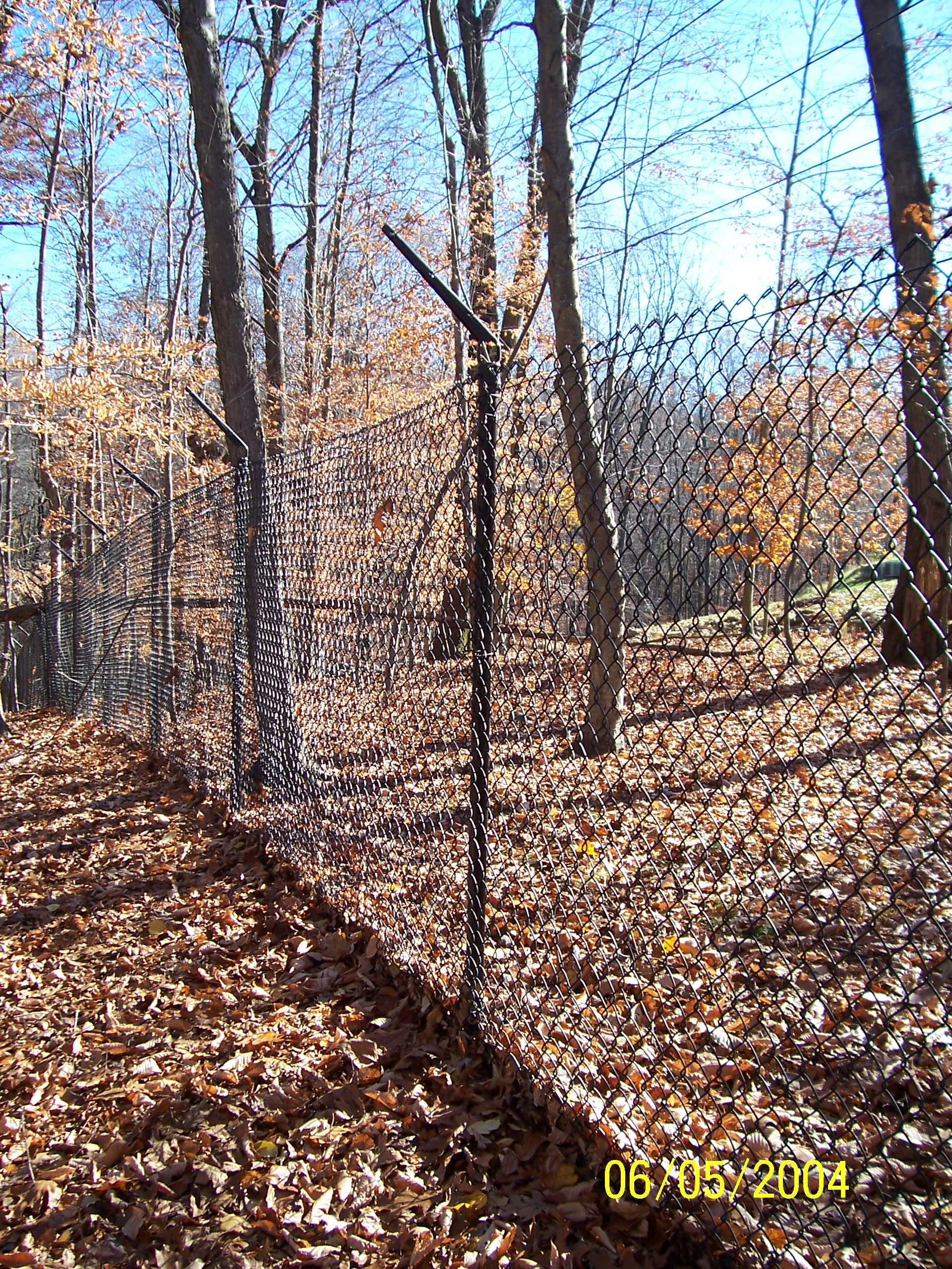Red Fox Fence Barbed Wire Fence